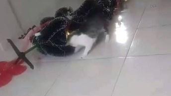 Gato Derrubou Árvore De Natal E Ainda Continuou Brincando Com As Bolinhas!