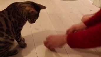 Gato Descobrindo Aonde Esta A Esfera, Que Inteligente, Confira!