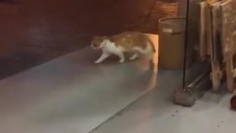 Gato Deslizando Com As Patinhas No Passeio, Veja Como Ele É Engraçado!