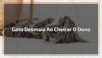 Gato Desmaia Após Cheirar O Seu Dono, Um Banho Seria Bom Hein!