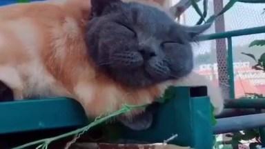Gato Dormindo Abrasado Com Outro Gato, Olha Só Que Fofinhos!