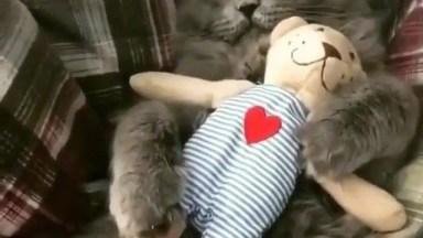 Gato Dormindo Com Seu Bichinho De Pelúcia, Ai De Alguém Se Tentar Tirá-Lo!