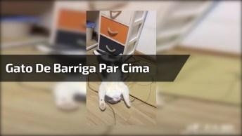 Gato Dormindo De Barriga Par Cima E Patas Esticadas, Que Preguiça!