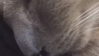 Gato Dormindo E Roncando, Olha O Que Está Acontecendo No Narizinho Dele!