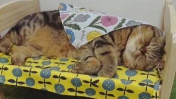 Gato Dormindo Em Caminha, Veja Que Coisinha Mais Fofinha De Animal!