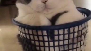 Gato Dormindo Em Cestinho - Ele É Uma Fofura, Confira E Compartilhe!