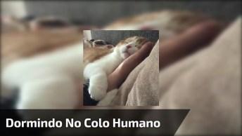 Gato Dormindo No Colo De Seu Humano, Impossível Não Ama-Los!