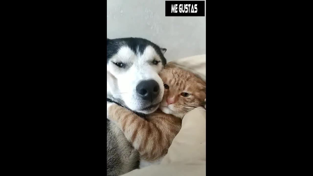Gato e cachorro abraçados, será que eles se amam