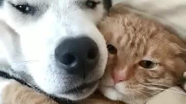 Gato E Cachorro Abraçados, Será Que Eles Se Amam? Sim Ou Com Certeza?