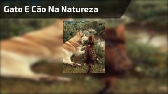 Gato E Cachorro Curtindo Juntos A Natureza, Que Linda Imagem!