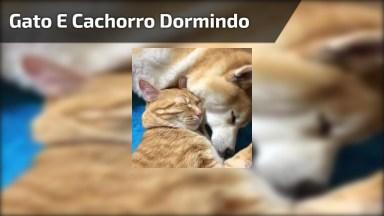 Gato E Cachorro Dormindo Juntinhos, Olha Só Que Coisinha Mais Fofa!