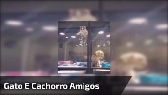 Gato E Cachorro Podem Ser Amigos? Veja O Vídeo E Descubra!