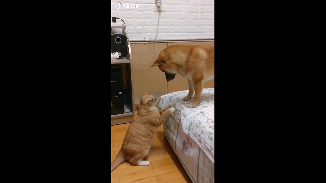 Gato e cachorro tendo um momento fofo juntos