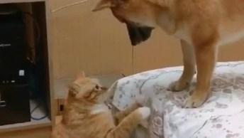 Gato E Cachorro Tendo Um Momento Fofo Juntos, Até A Cor Deles É Parecida!