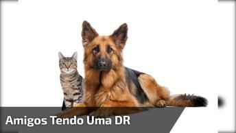 Gato E Cachorro Tendo Uma Dr, Mas Fazendo As Pazes Logo Em Seguida!