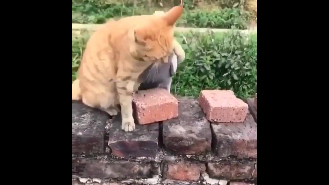 Gato e pombo em uma lutinha de brincadeira, uma fofura de video!