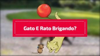 Gato E Rato Brigando Ou Brincando, É Muito Amor Envolvido, Confira!