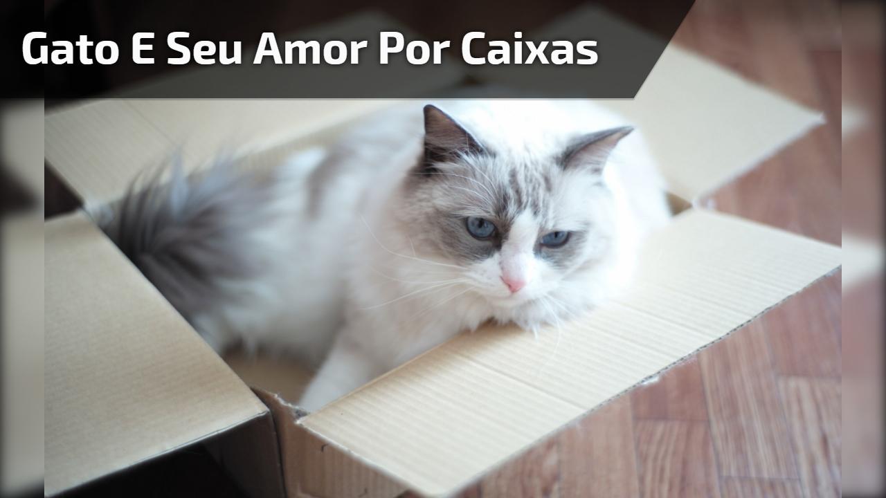 Gato e seu amor por caixas