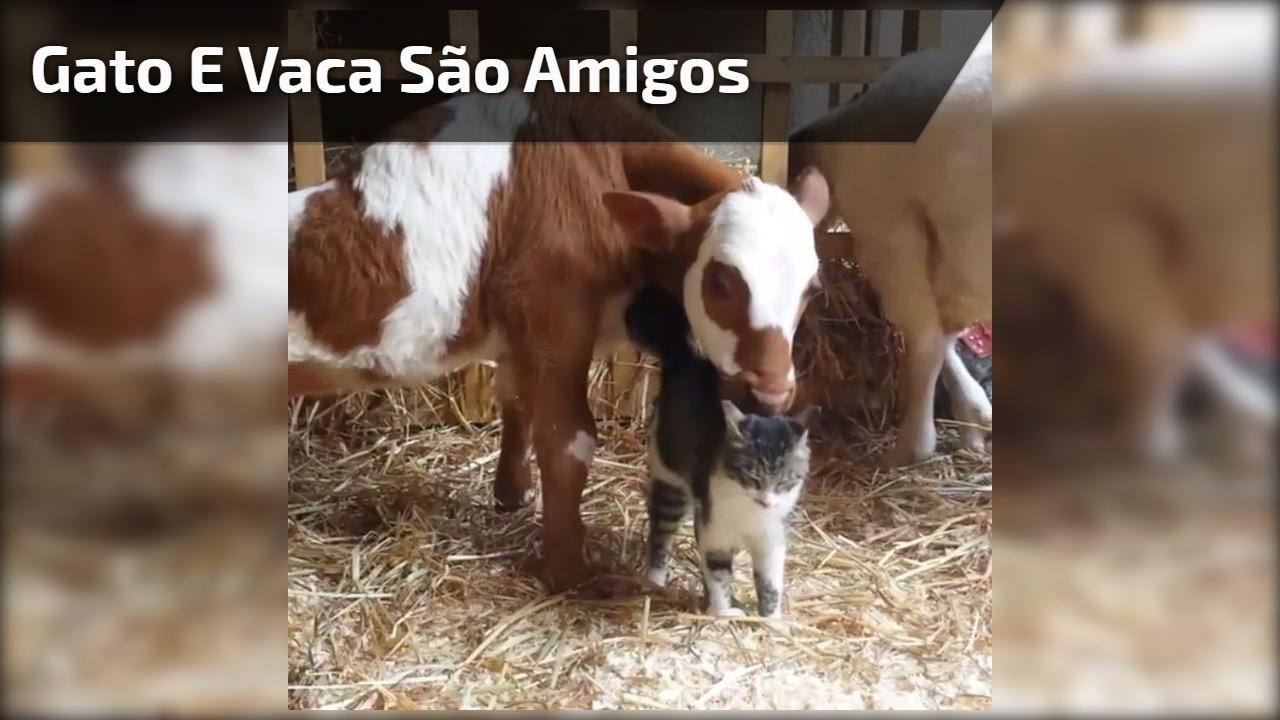 Gato e vaca são amigos