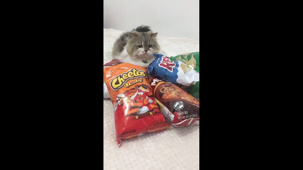 Gato egoísta não quer dividir seus salgadinhos com ninguém