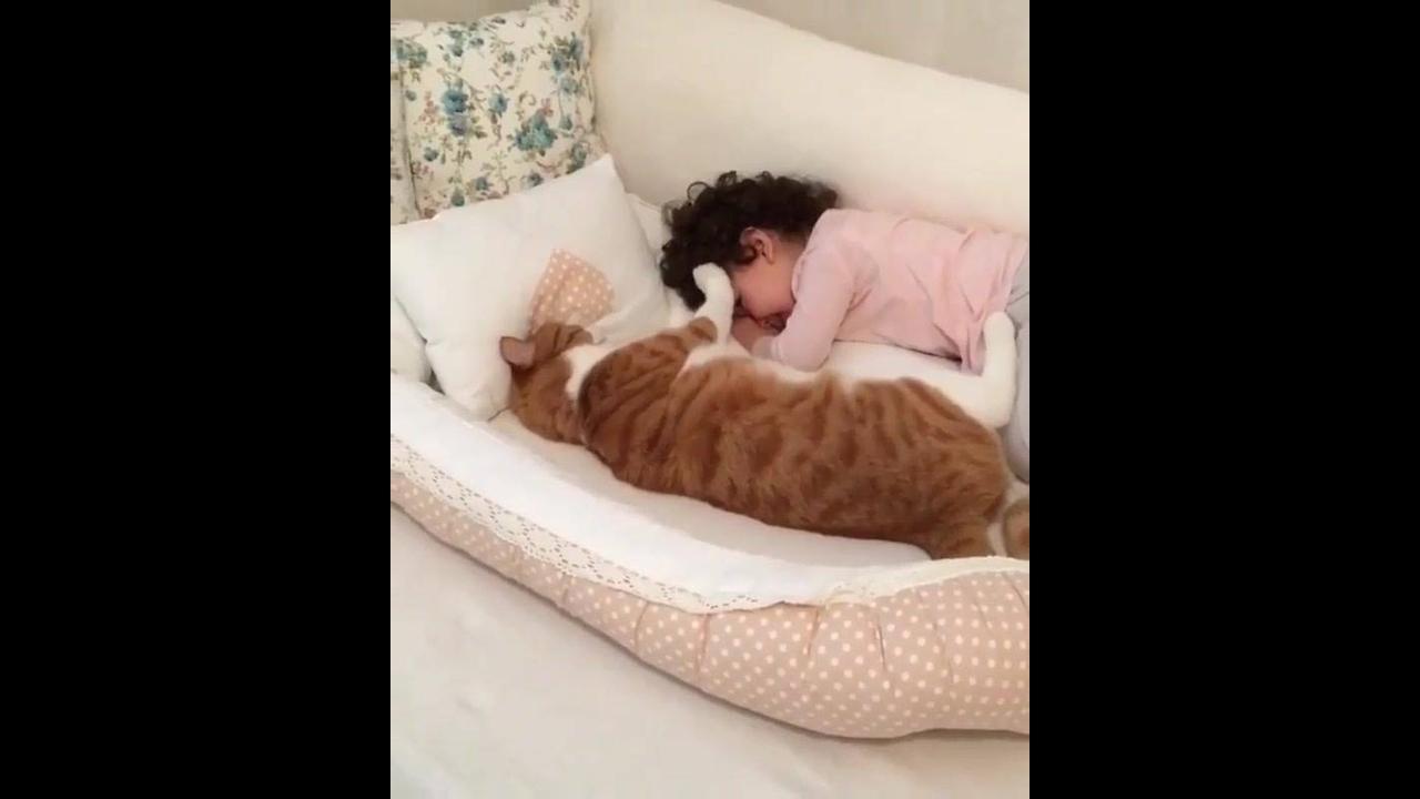 Gato enorme com criança. que dupla linda e fofa