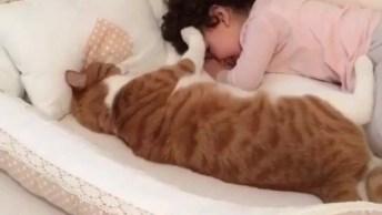 Gato Enorme Com Criança. Que Dupla Linda E Fofa, Confira E Compartilhe!