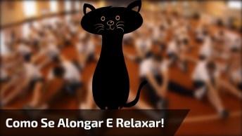 Gato Ensina Como Se Alongar E Relaxar, Que Bichano Do Avesso!