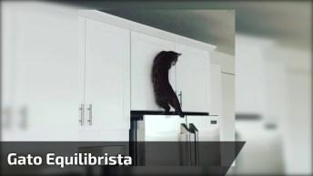 Gato Equilibrista, Veja O Que Ele Faz Para Chegar Em Cima Da Geladeira!