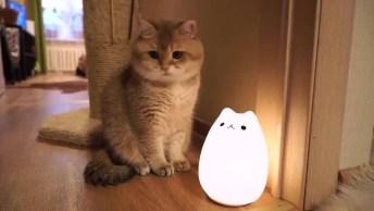 Gato Estranhando Boneco Que Acende As Luzes Coloridas, Confira!