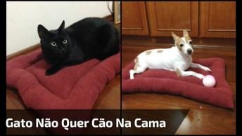Gato Expulsando Cachorro Da Sua Cama - Sai Do Meu Lugar, Criatura!