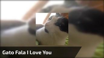 Gato Falando 'I Love You', Que Ser Mais Lindo E Fofo, Confira!
