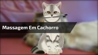 Gato Faz Longa Massagem Em Cachorro, Com Direito A Beijinhos. . .