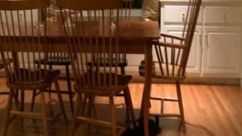 Gato Fazendo Algo Engraçado Em Baixo De Uma Mesa, Confira!