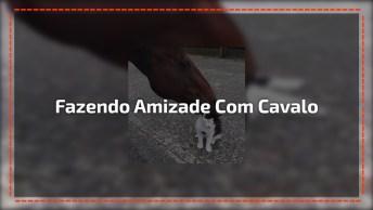 Gato Fazendo Amizade Com Cavalo, Olha A Gracinha Que Ele Faz!