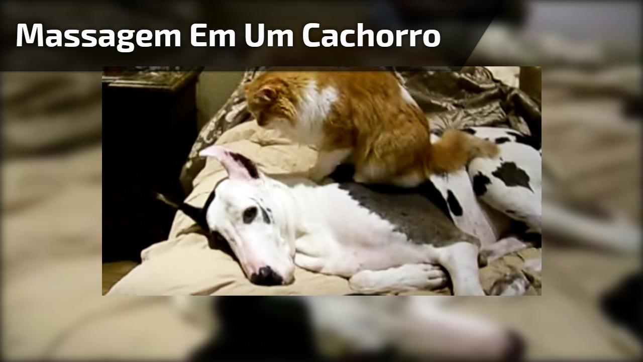 Massagem em um cachorro