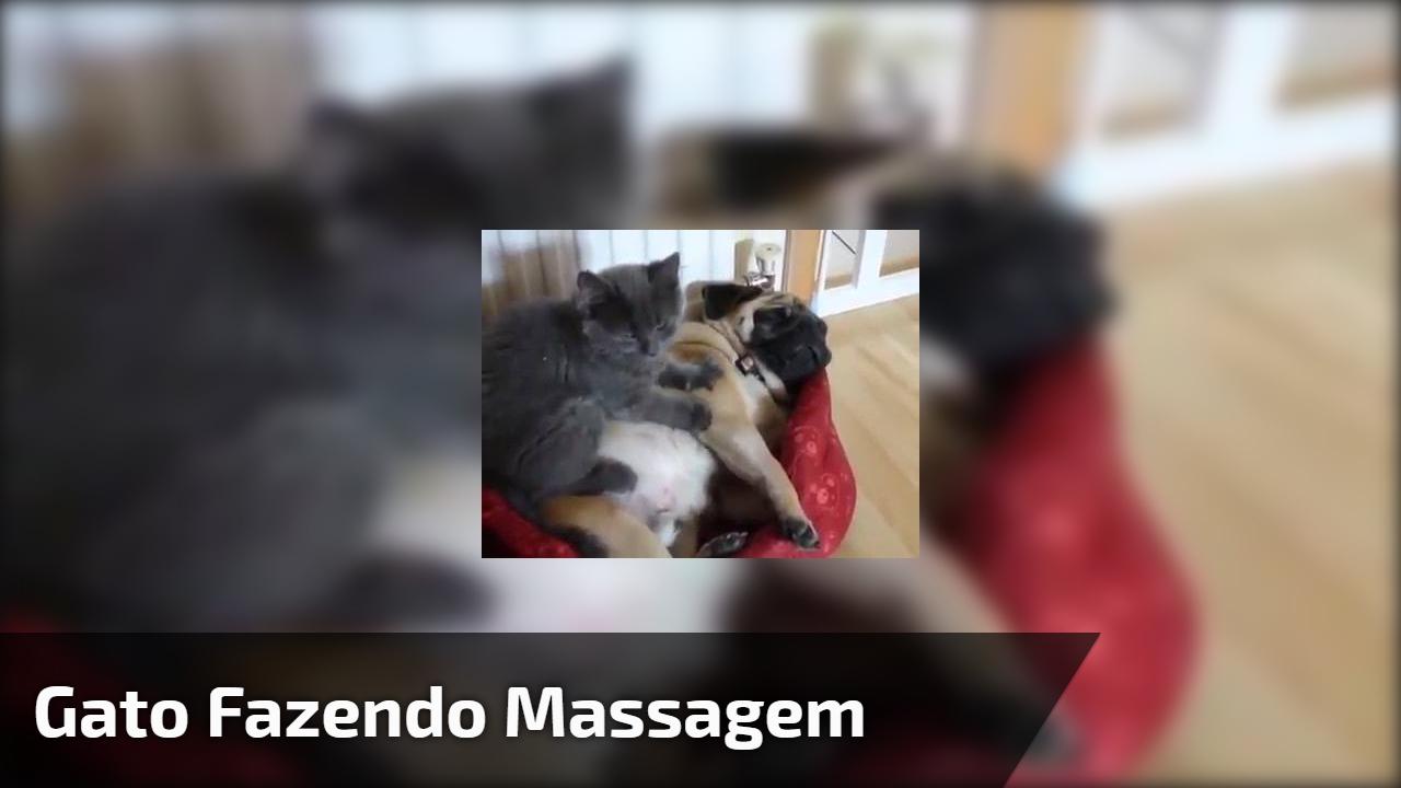 Gato fazendo massagem no cachorro, tem coisa mais fofa que essa?