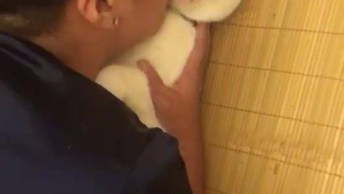 Gato Fica De Boca Aberta Após Ganhar Muitos Beijinhos Do Seu Humano!