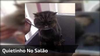 Gato Fica Paralisado Para Cortar Suas Madeixas, Impressionante!