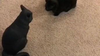 Gato Ganha Uma Cópia Sua Para Brincar, Veja Como Foi O Resultado!