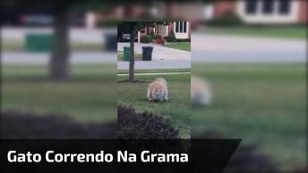 Gato Gordo Correndo Na Grama, Veja Como Ele É Fofinho E Cansado Hahaha!