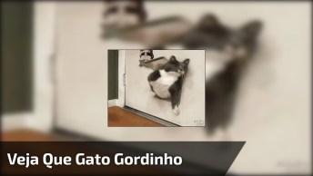 Gato Gordo Passando Por Um Buraco Na Porta, Quase Que Não Deu!