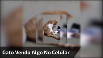 Gato Gosta Do Que Vê No Vídeo Em Celular E Tem Reação Surpresa!
