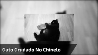 Gato Grudado No Chinelo, Eles Adoram Fazer Essa Bagunça, Confira!