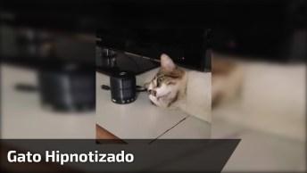 Gato Hipnotizado Pela Música, Quem Você Conhece Que Fica Assim?