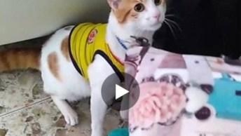 Gato Imita Dono Falar Gol, Quando Você Pensa Que Já Viu De Tudo, Hahaha!