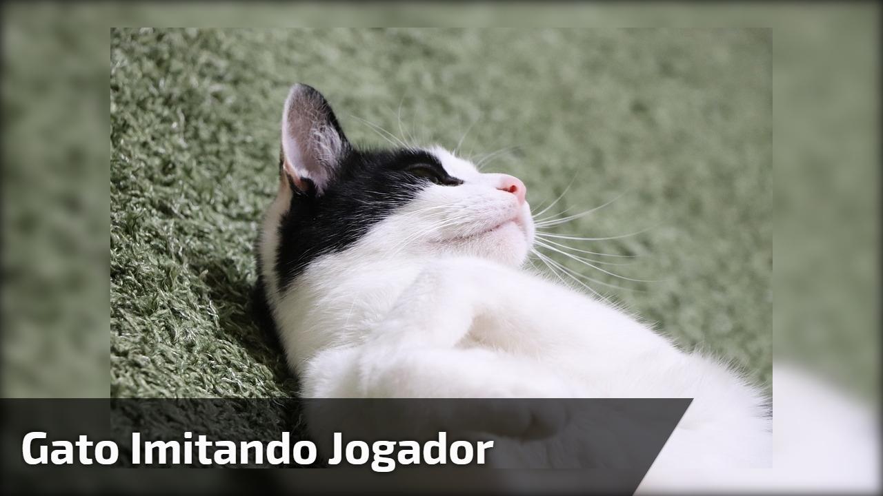 Gato imitando jogador