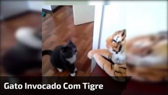 Gato Invocado Com Tigre, Olha Só Como Ele Bate Sem Dó No Coitado!