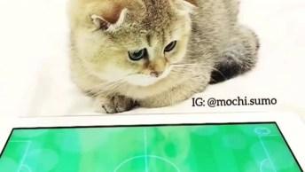 Gato Jogando Futebol No Tablet, Que Coisa Mais Fofa, Confira!