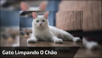 Gato Limpando O Chão, Kkk! Minha Dona Não Sai Do Facebook, Alguém Tem Que Limpar