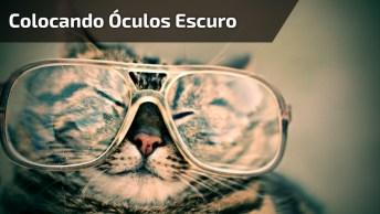 Gato Lindo Colocando Óculos Escuro, Ele Tem Muito Estilo, Confira!